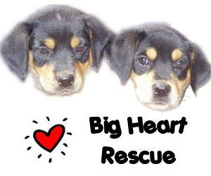 Big Heart Rescue Society