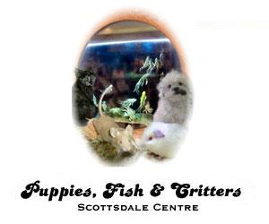 Puppies, Fish & Critters